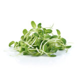 sunflower_sprouts-300x300
